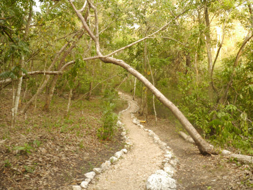 The path to the Volunteer House
