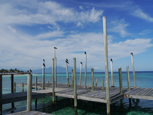 Birds on the dock in paradise