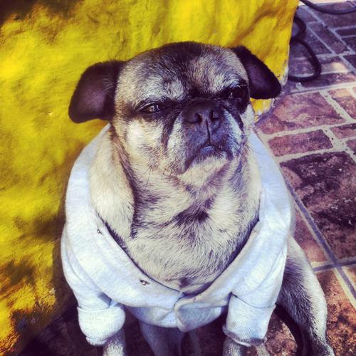 Dog in a Coat in Peru