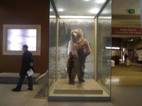 A bear in the Smithsonian