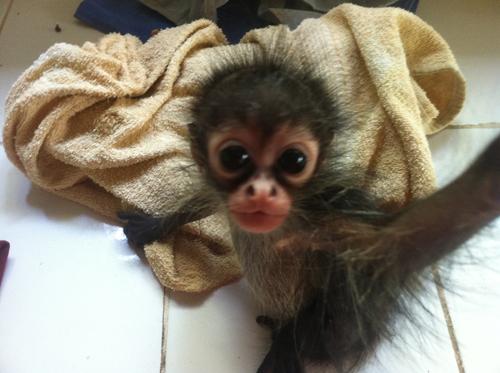 Bab Monkey