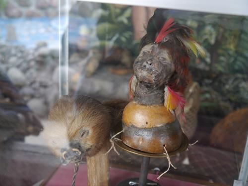 Shrunken Head in Ecuador