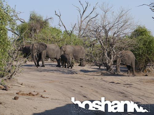 Elephants in the wild, National Park in South Africa